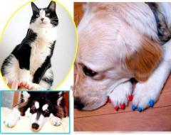 Антицарапки, накладки на когти для животных,