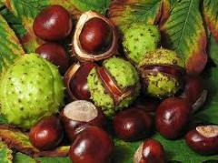 Extract horse-chestn