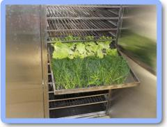 Drying of medicinal herbs