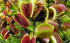 Растения хищники, растения хищники купить,