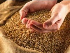 Wheat fodder wholesale for Expor