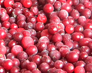The red currant frozen