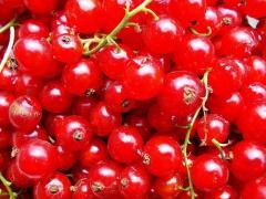 Саженцы смородины красной. Смородина красная сорта