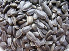 Реализация семян подсолнечника сорта Чумак