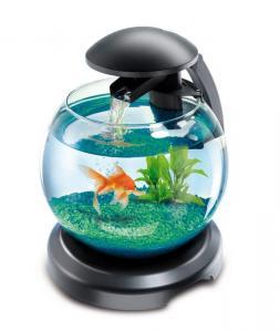 Akwarium okrągłe