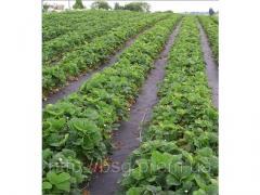 Agrofibre, agrotextiles, geotextiles