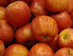 Саженцы яблонь сорта Роял Гала