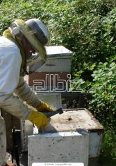 The stock is beekeeping