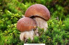 Marinated white mushrooms
