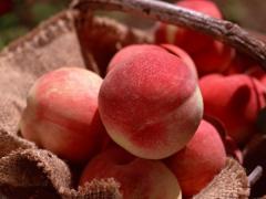 Саженцы персика сорта Любимец