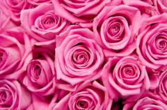 """Розовые Розы """"Аква"""""""