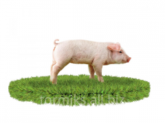 Compound feed for pigs from 1 to 8 kg prestart