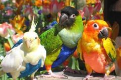 Купить прогулочный костюм для попугая ,