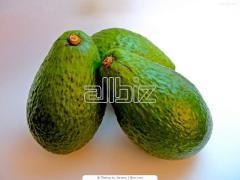 Авокадо Tray Голландия