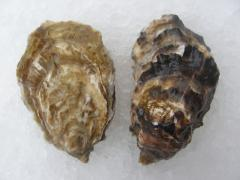 Oysters imperial to buy
