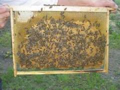 Реализация пчелопакетов