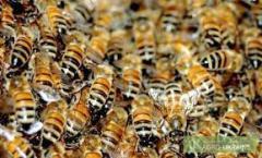 Реализация пчелосемей.