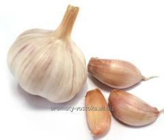 Garlick oil of garlic extract oil