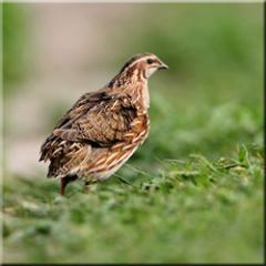 Kuş kesme ve işleme kompleks teçkizatlar