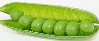 Горох овочевий Скінадо