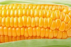 Кукуруза, Кукуруза купить, Кукуруза оптом,