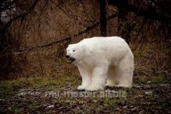 Effigy of a polar bear full-scale