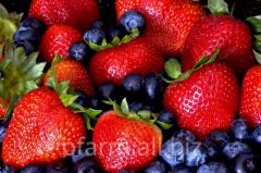 Greenhouse berries Farm Petrovickih