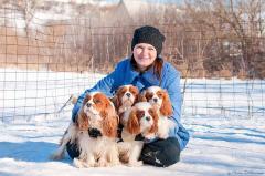 Cavalier King Charles Spaniel puppies.