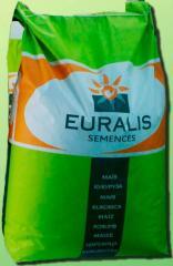 Corn hybrid Christelle Euralis Semences