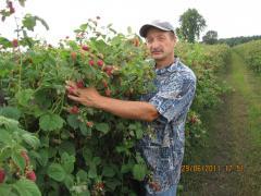 Сажанцы фруктовых деревьев, кустов, цветов вырощенных в контейнерах