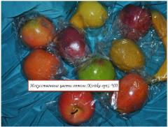 Artificial Fruit of allsorts