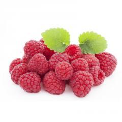 Saplings of everbearing raspberry