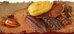 Cocoa products, Cocoa products to buy, Cocoa