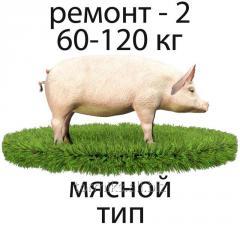 BMVD of 10% for pigs repair (SK-46 MT)