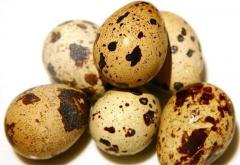 Eggs of quails