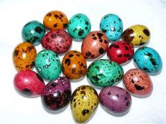 Eggs dining rooms quail