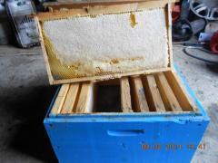 Продам пчелопакеты в Одесской обл.