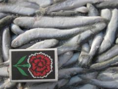 Fish (XAMCA)