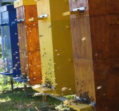 Ульи деревянные от производителя, Нуклеусные улья, многокорпусных улья