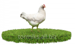 Compound feed for Broilers from 31 to 56 days