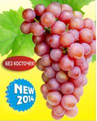 Саженцы винограда