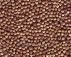 Millet yellow
