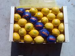 Fruit and vegetables wholesale