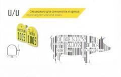 Eartabs for pigs of MULTIflex U/U