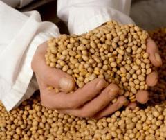 Соя экструдированная   Зерновые, бобовые и