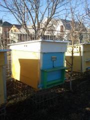 Вулики, бджолосім'ї, причіп для вуликів. Розпродаж