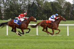 Saddle horses Millennium