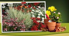 Flowers seeds perennials