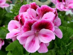 Цветы на срез