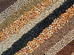 Wheat, corn, colza, soy wholesale in bulk for